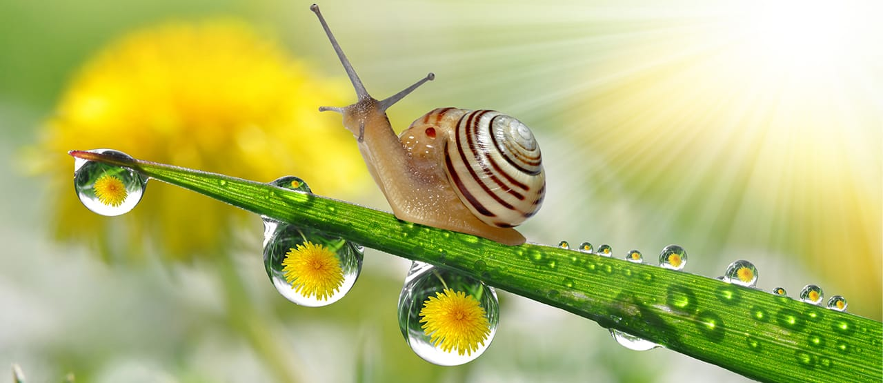 how long do snail sleep