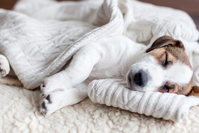 should you wake up a sleeping dog